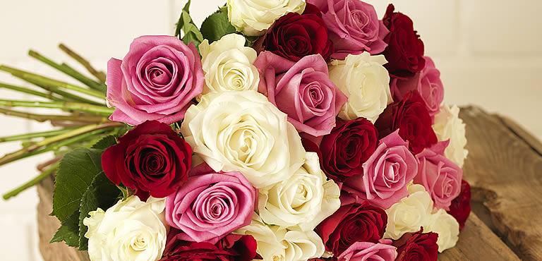 Rosen: Farben und Anzahl