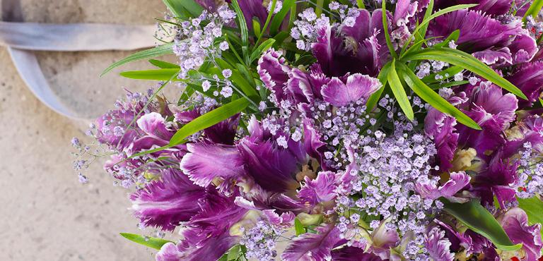 violettes bouquet