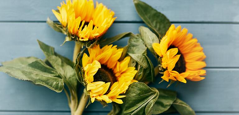 Send Sunflowers