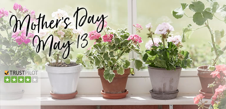 Send plants for Mother's Day